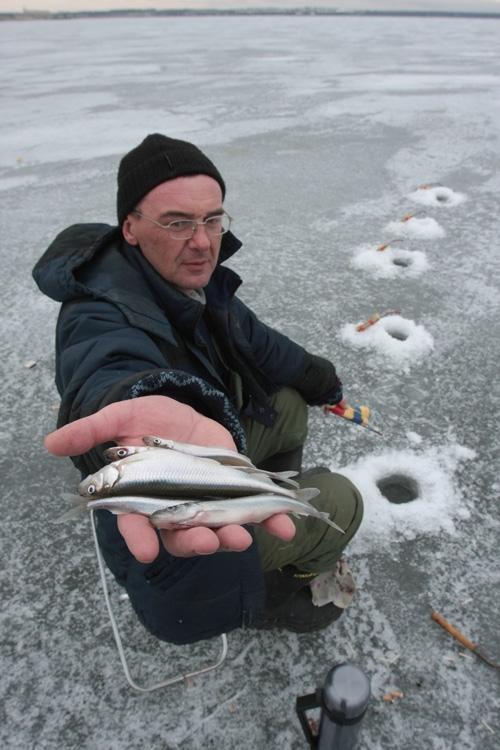рыбалка на корюшку и как ее ловить